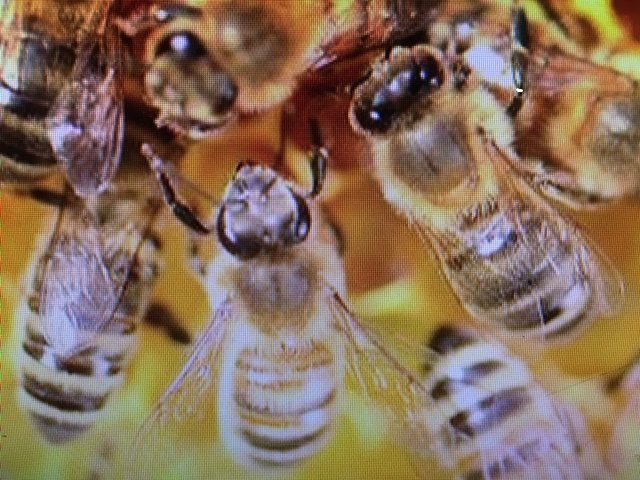 Image of several bees